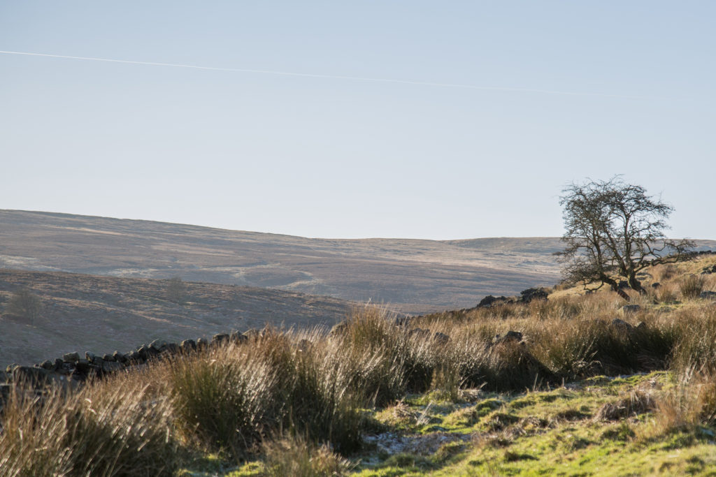 View from Bronte Way