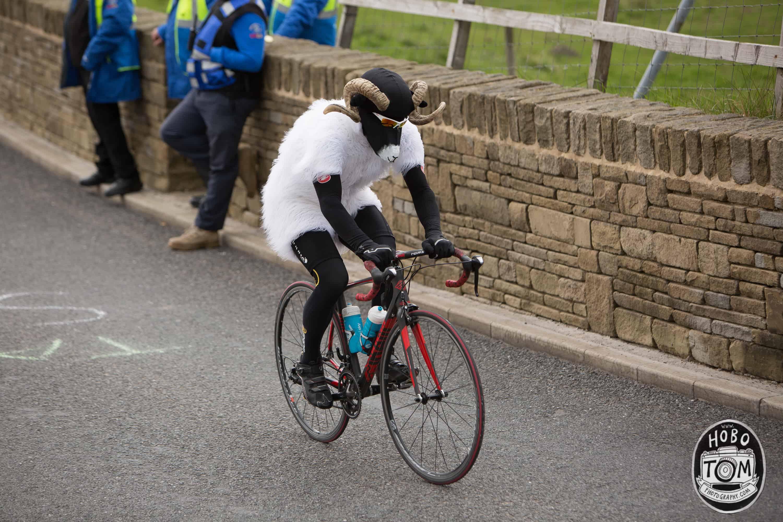 Cycling Sheep, Tour de Yorkshire
