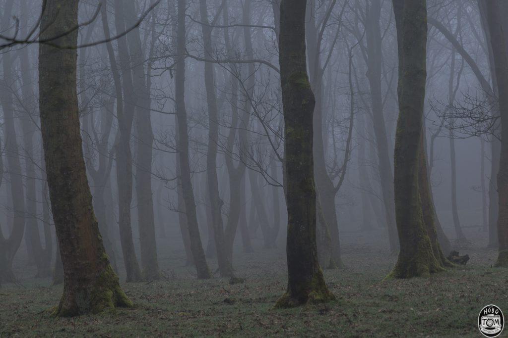 Hunters Hill Plantation, Harden, West Yorkshire.